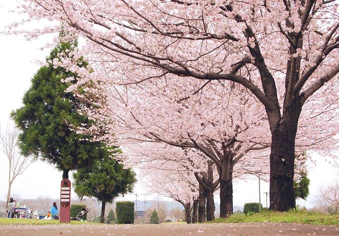 熊本 ホームページ制作会社 春