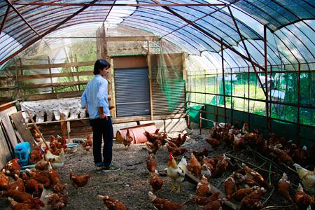 養鶏場の澤井さん