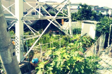 事務所横の畑in鉄塔